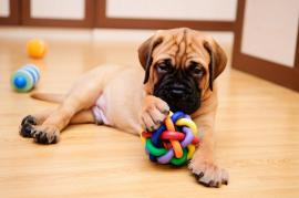 How to Maintain a Clean House when You Have Dogs